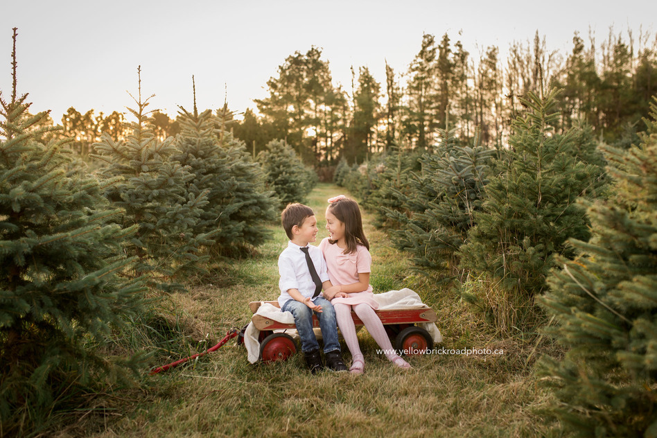 Family Photographer Guelph Yellow Brick Road Photography