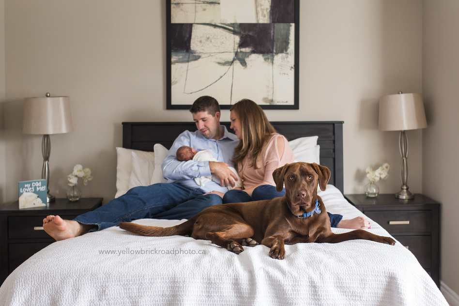 Newborn Photography Guelph Family pose on bed