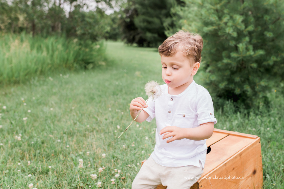 Guelph Family Photos with little boy blowing dandelion